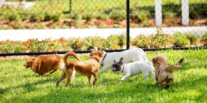 El Ayuntamiento estudia la apertura del primer parque canino
