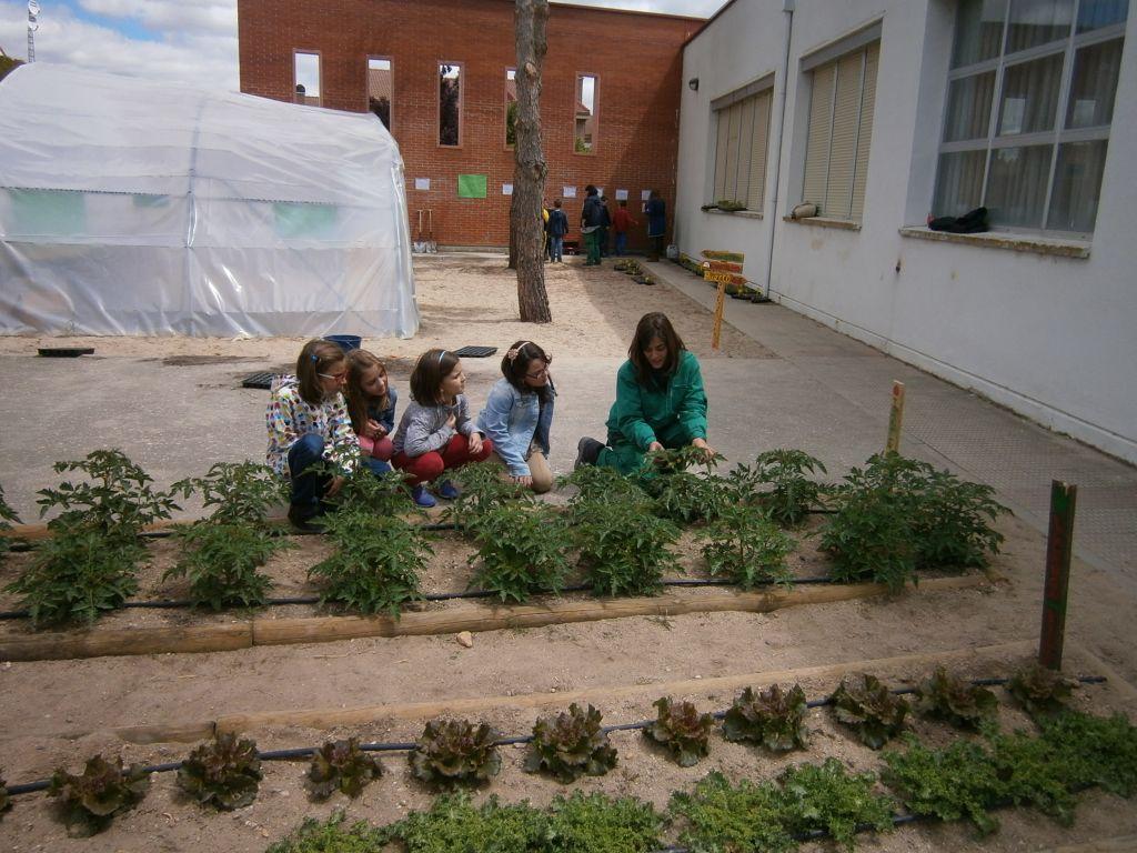 Los integrantes del Programa Dual de Jardinería dan a conocer el huerto del CEIP Ntra. Sra. del Villar a los escolares