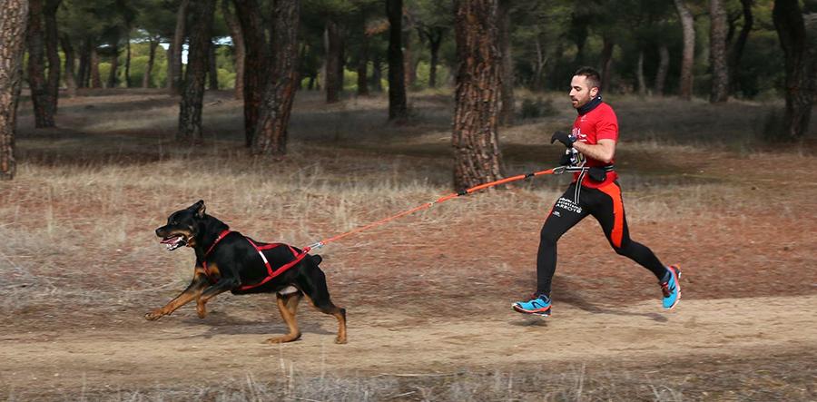 Ares, el primer rottweiler del país en convertirse en perro de terapia