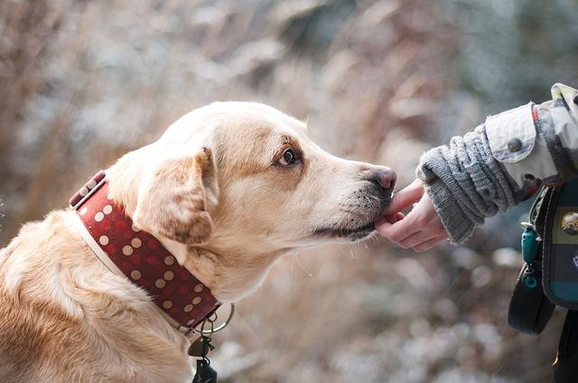 Policía Local y Ayuntamiento buscarán acabar con el envenenamiento de perros en la localidad