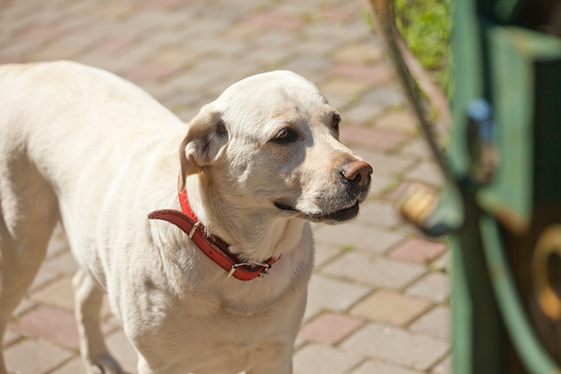 IU y la ONG Libera organizan una charla sobre protección y cuidado de mascotas