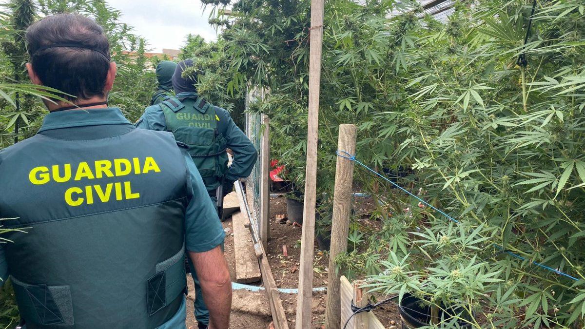 La Guardia Civil ha desmantelado una plantación de Marihuana en la localidad de Laguna de Duero