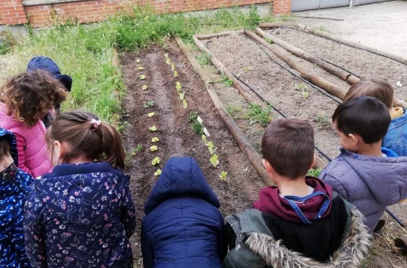 Regresan las labores al huerto escolar del CEIP Ntra. Sra. del Villar